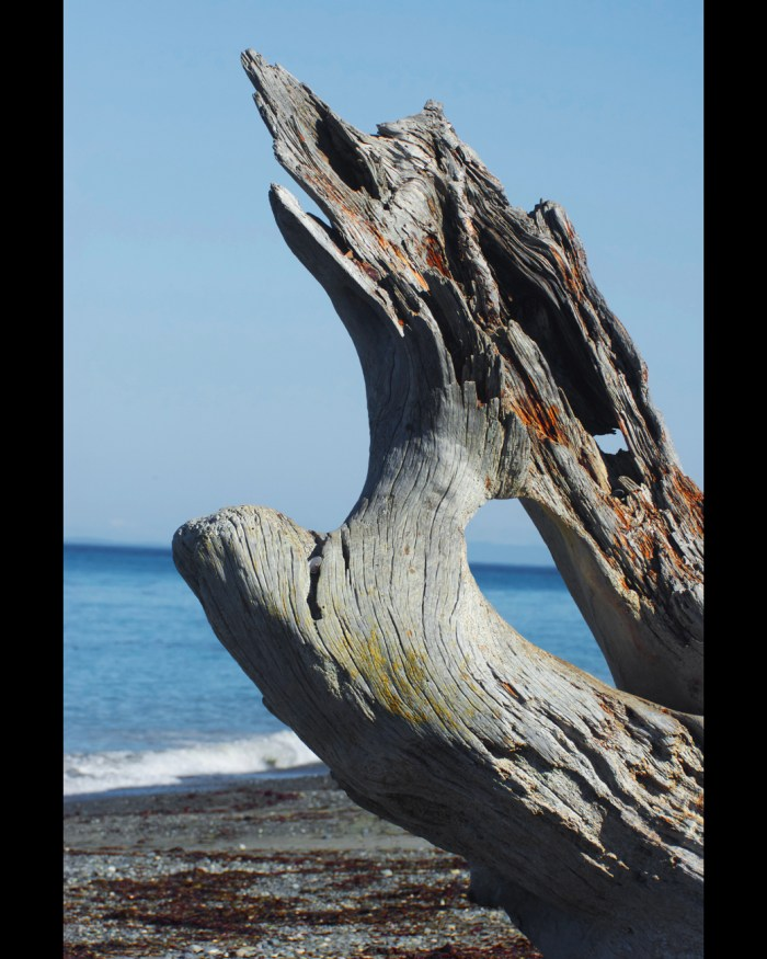 Artistic driftwood framing a view of the Strait of Juan de Fuca