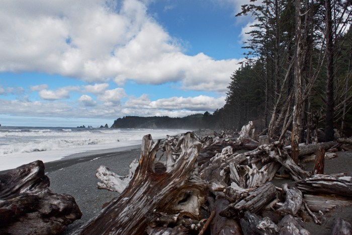 Rialto Beach with driftwood in the foreground and blue skies with puffy white clouds