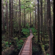 Olympic National Park – Ozette Lake and Cape Alava Trail