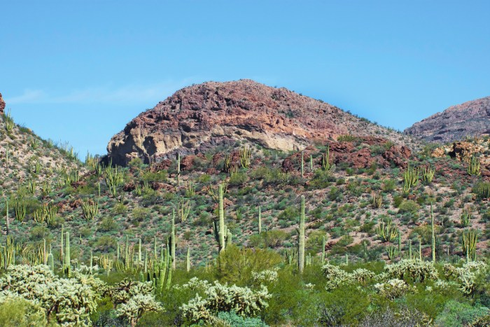 View of rocky desert mountain and bright green Sonoran desert vegetation from Ajo Mountain Drive