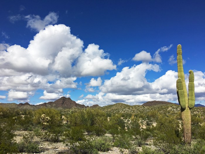 Sonoran desert landscape with large saguaro in the foreground, vivid blue sky and white, puffy clouds