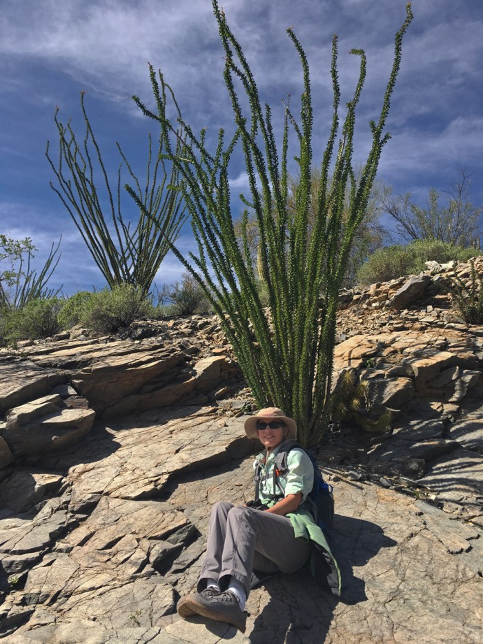 Christina resting on a flat rock in front of some ocotillo at the end of the wash before Senita Basin Loop