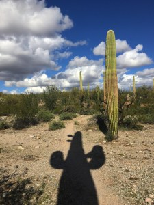 View of Sonoran desert vegetation with a human-like shadow of a saguaro cactus and puffy clouds in the sky