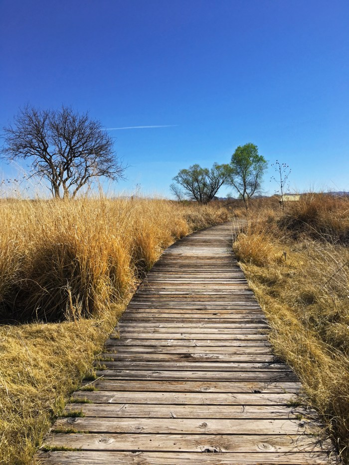 Boardwalk through the grassland with scattered trees at Arivaca Cienega