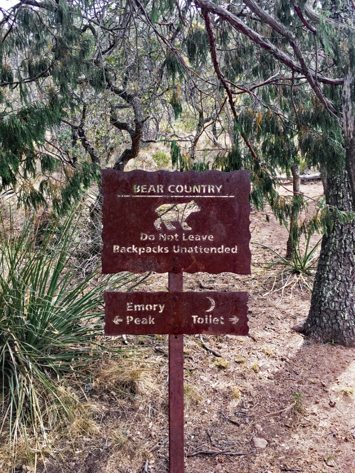 Bear and trail sign up in the pines and firs on the Pinnacles Trail in Big Bend National Park