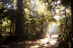 Illumination of Trees