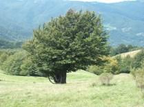 2014-Alpe-Orocco 034 (1024x768)