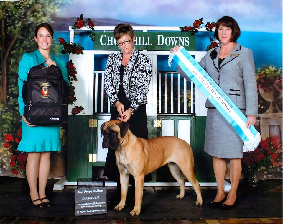 Bramstoke's Paige Turner Best Puppy in American National Specialty