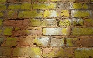 moss aged brick on Barnsley Gardens ruins