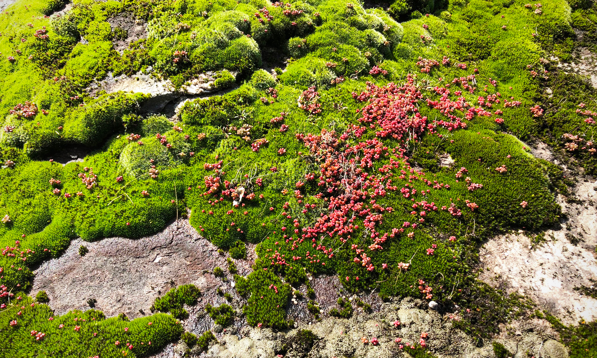 early spring moss