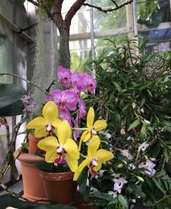 Biltmore Estate Conservancy flowers