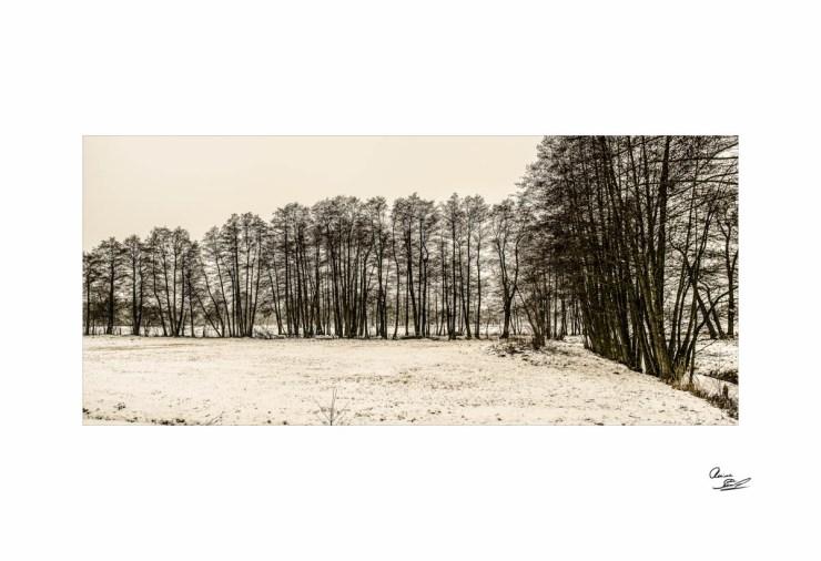 Wald_Schnee_Brabu