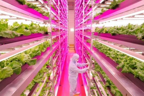 Hydroponics, aquaponics and vertical farming systems... What we've ...