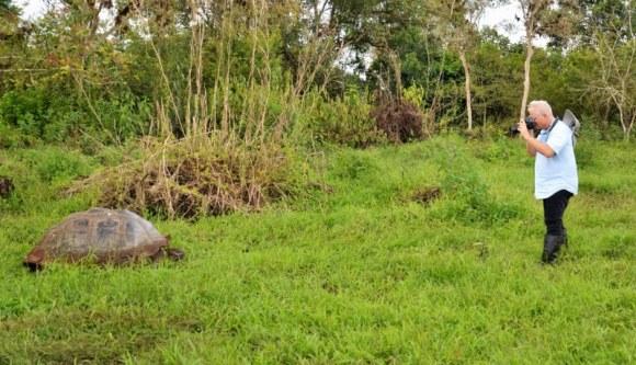 Sea turtle in field
