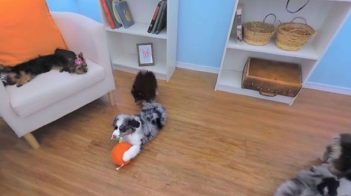 Orapup puppies interactive commercial