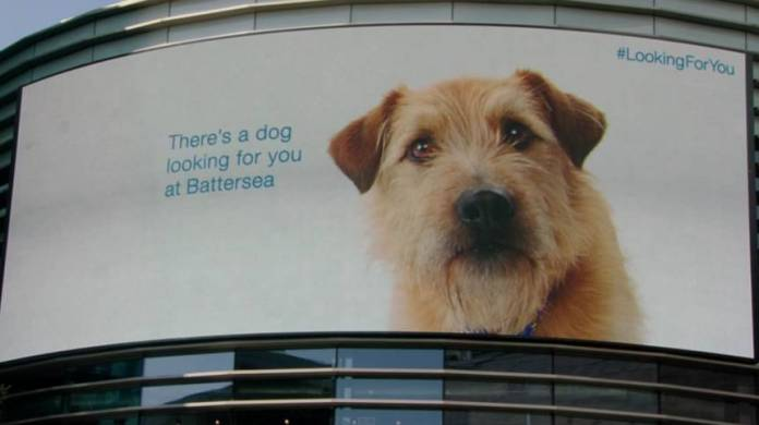 Battersea Dogs & Cats Home campaign