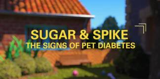 Merck Animal Health Introduces Pet Diabetes Educational Programme