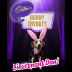 Inspirational rescue pup wins Cadbury Bunny Tryouts