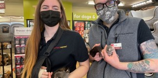 "Pet Food Express launches ""Kitten Season"" awareness campaign"