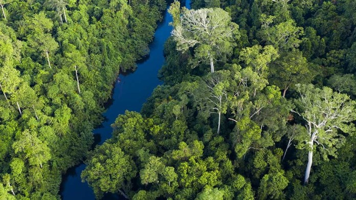 Nestlé to help protect and restore forest landscapes in Southeast Asia