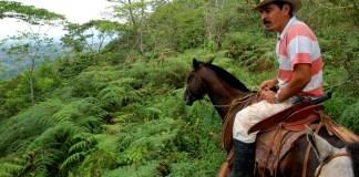 Klarna partners Scotch & Soda to support global reforestation efforts