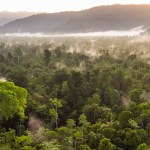 Puma commits to protecting forests in partnership with NGO Canopy