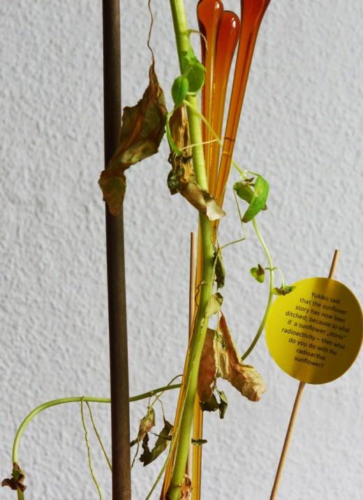 Das Geheimnis der japanischen Sonnenblume_4