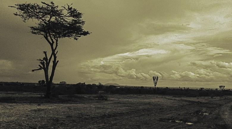 4_Trees_180x100