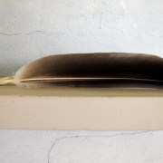 Feather, Olson House
