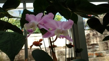 The Orchids are all in the Latitude 23 House