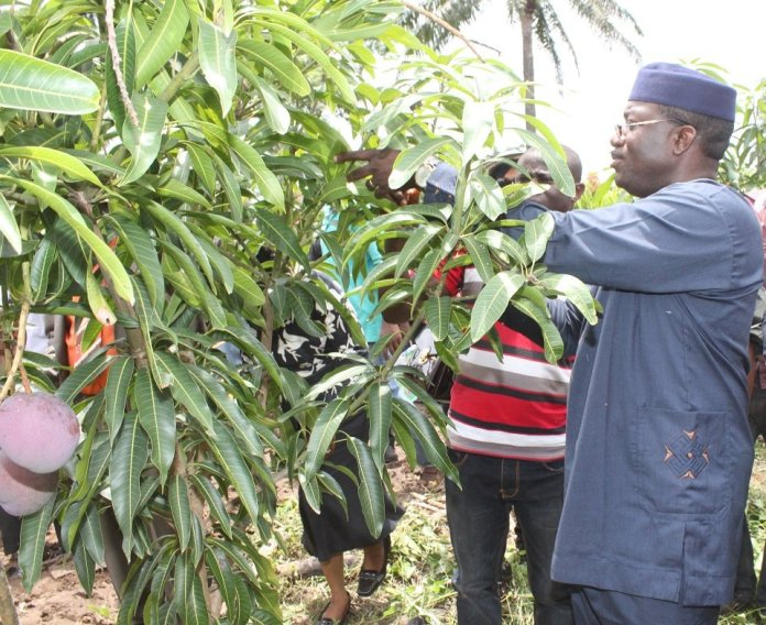 Ekiti State Government To Make Agriculture A Priority - Brand Spur