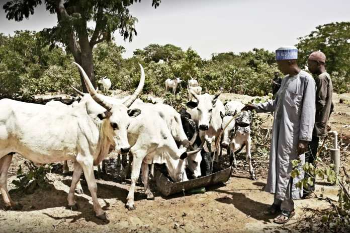 Arla scales up its commitment to develop a sustainable dairy sector in Nigeria - Brand Spur