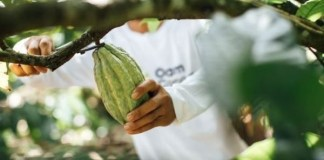 Olam Cocoa launches new business for professional chefs, bakers and pâtissiers