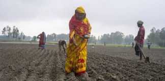 FAO welcomes $3 million contribution from Germany and Sweden to help farmers fight the impact of climate change