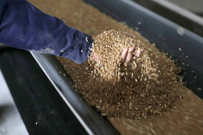 Global food prices continue rising in October - FAO Brandspurng