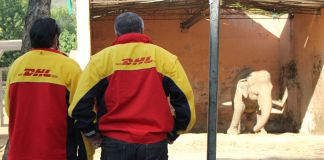 DHL safely relocates the world's loneliest elephant Brandspurng