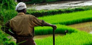 Help for Nigerian small-scale farmers to improve food security and combat poverty in the face of COVID-19 brandspurng