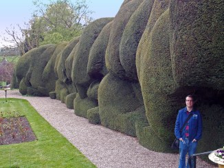 The other Yew Hedge