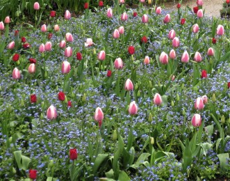 co-ordinated tulips