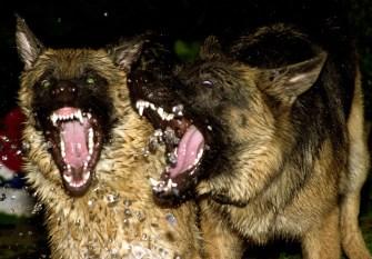 !ar-ah-teeth