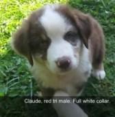 Claude-7wks