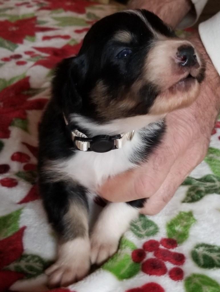 Gwen Puppy
