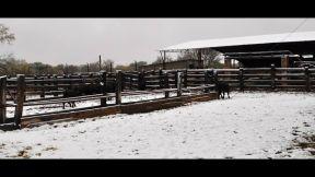 nevada buenaventura marzo 8 - 5