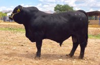 RTH MR Largent-688 Improver 440-4 22 meses
