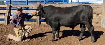 559-5 9305 LeadGunxImprover 14 meses 510 kg