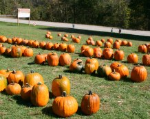 McKenna's Pumpkin Patch
