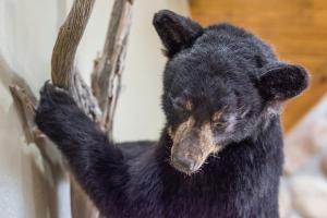 Branson-Vacation-Houses-Black-Bear-Lodge-01-1042