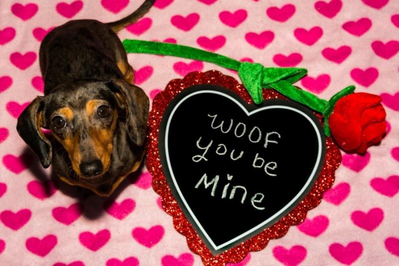 amor-em-ingles-cambly-valentine.jpg