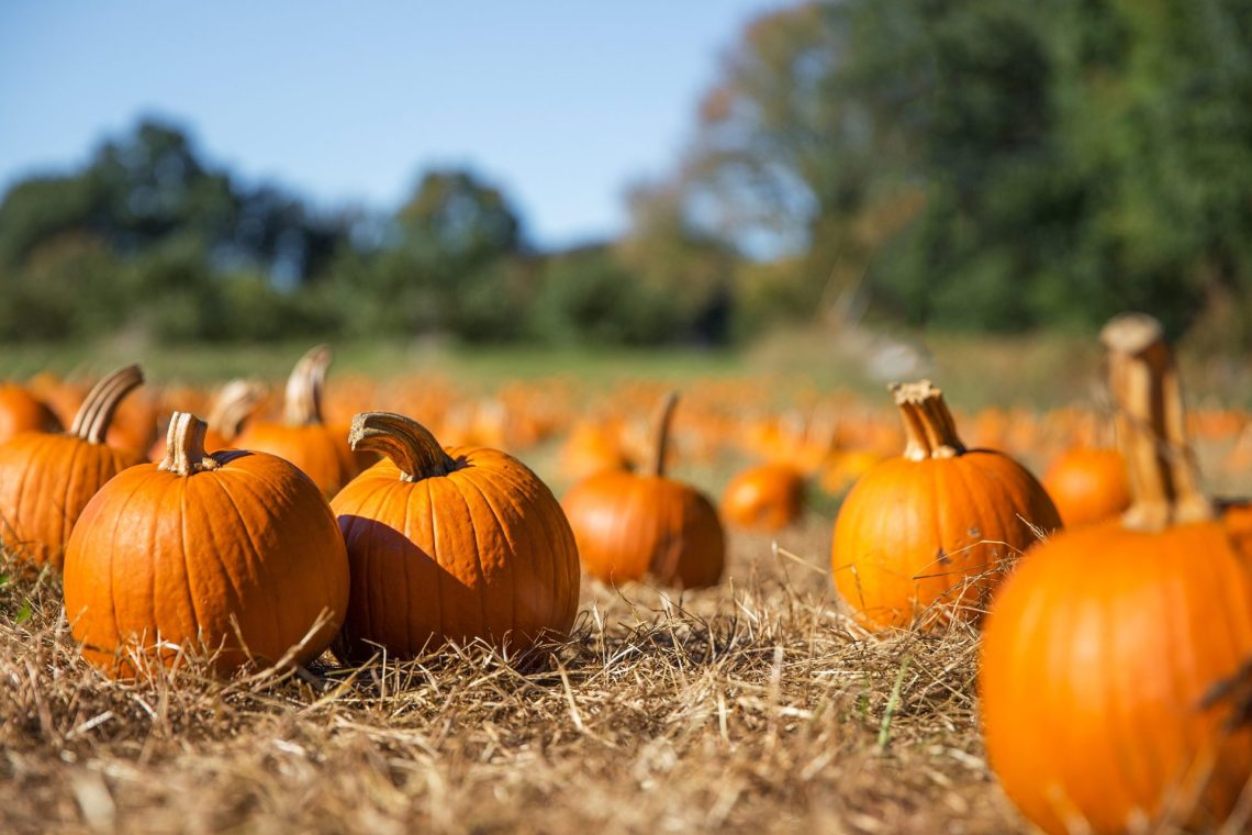 pumpkins en ingles cambly Vocabulary in English