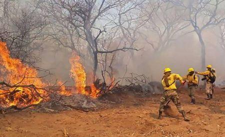 Bombeiros combatem o incêndio que arrasou com centenas de hectares de floresta.